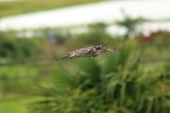 飛翔1.jpg